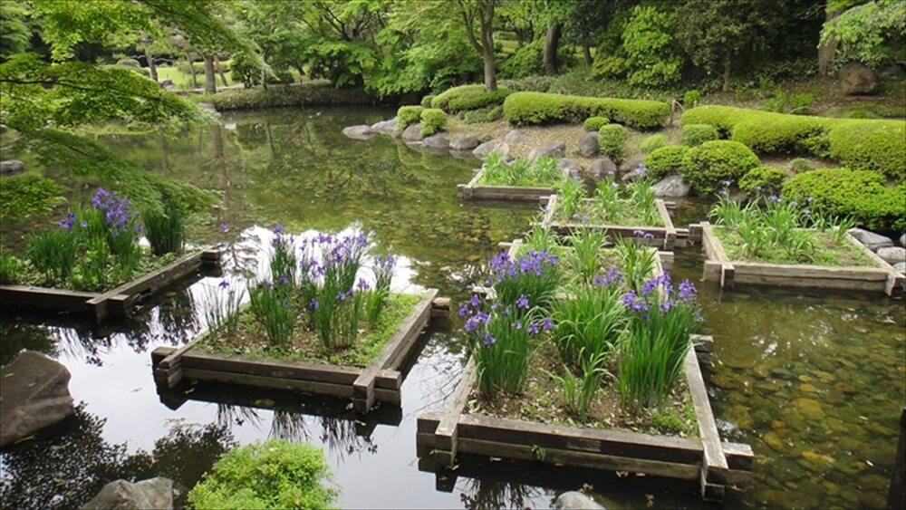むつび池とアヤメ桝