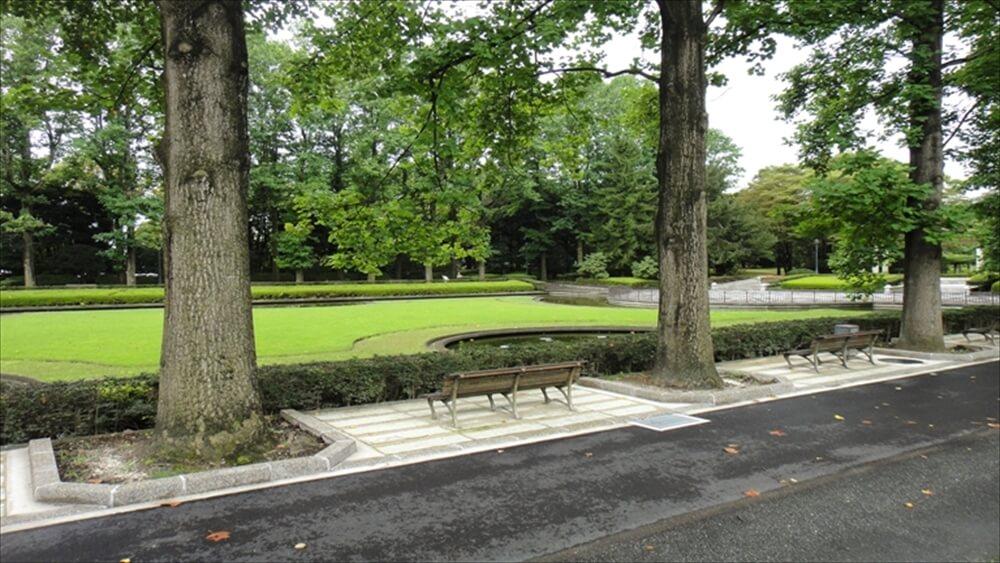 ユリノキ並木とベンチ