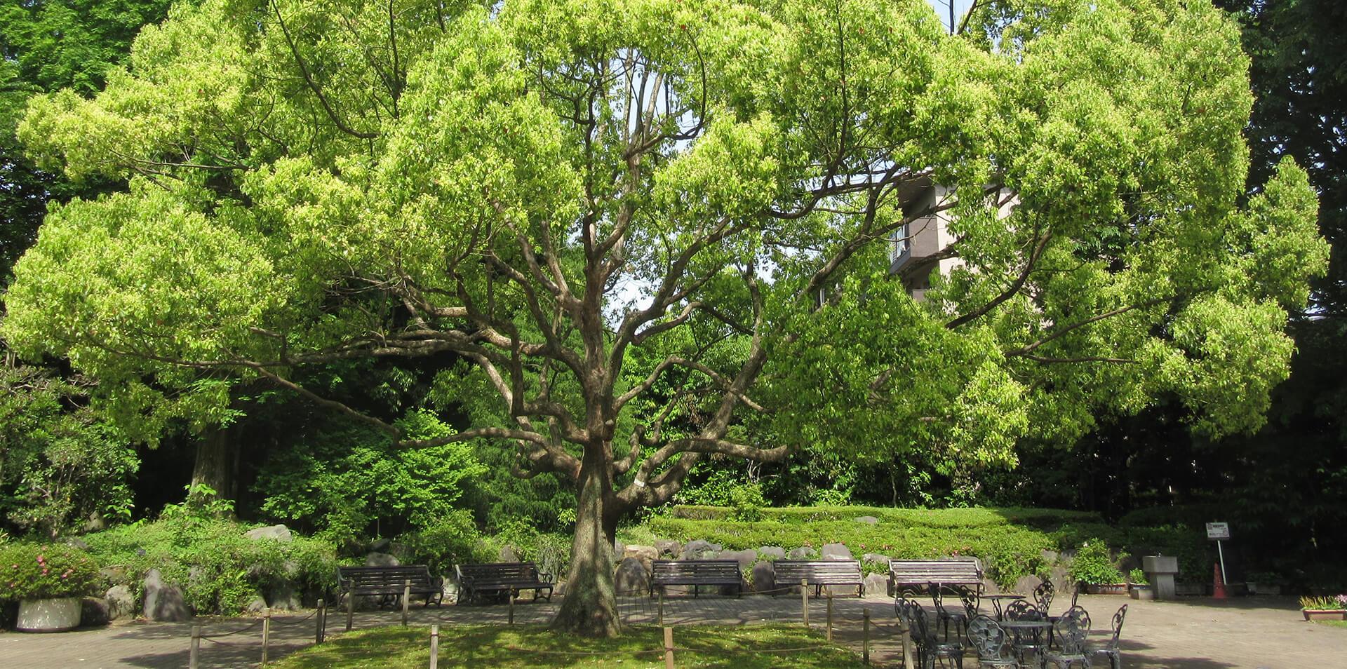 中央公園座談室