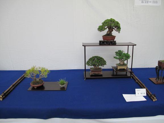 栃木県小品盆栽展