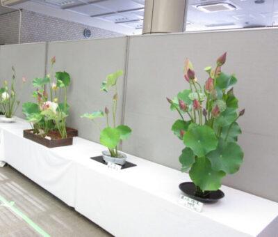 蓮の生け花展